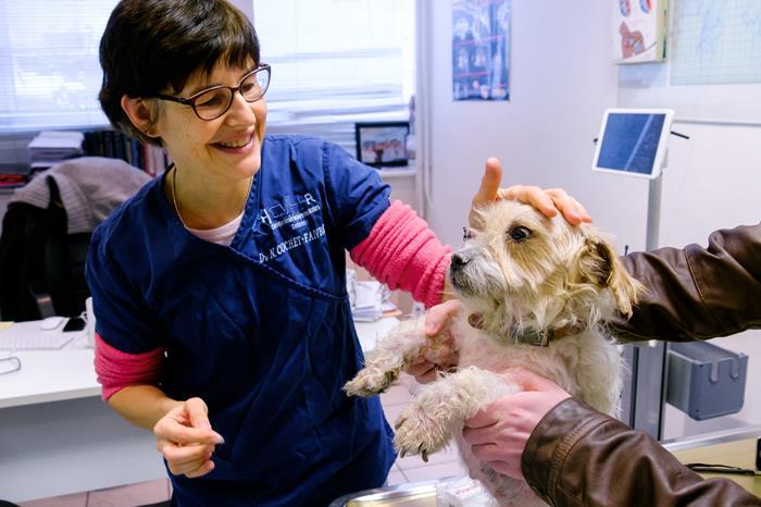 Examen dermatologique à la clinique vétérinaire des Halles- référé