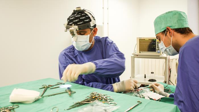 Chirurgie à la clinique vétérinaire des halles - référé