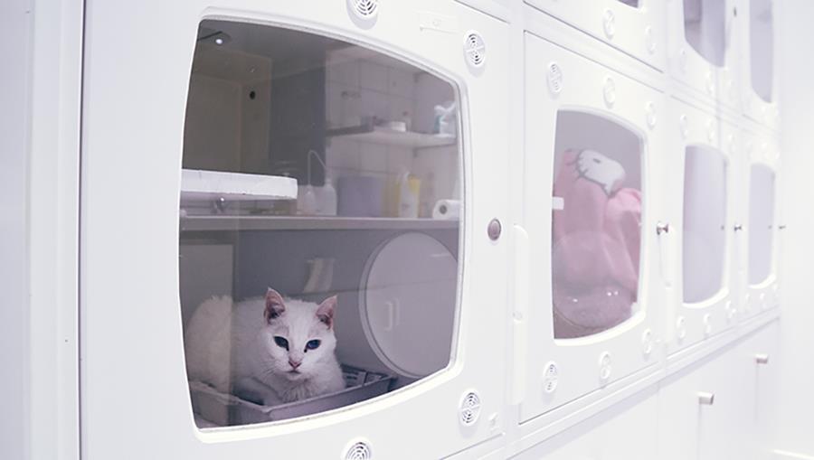 Hospitalisation des chats à la clinique vétérinaire des Halles - référé